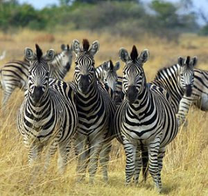 Travel to Botswana
